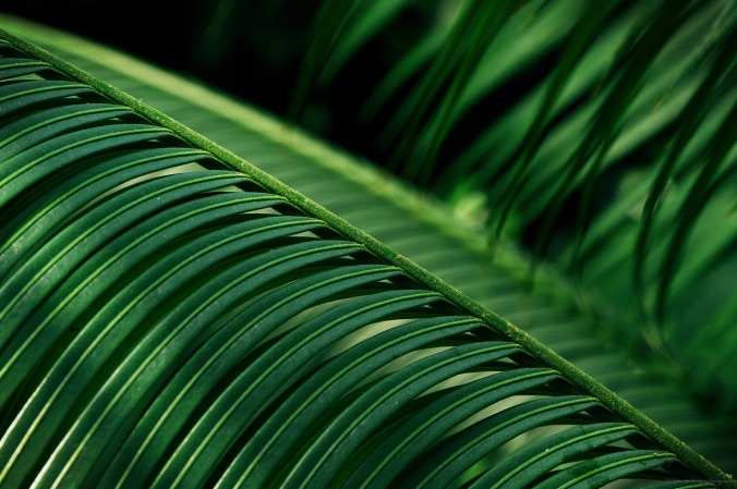 "Own cycas palm tree shot... guess why my fellow photographers call me ""Mr Green !"""