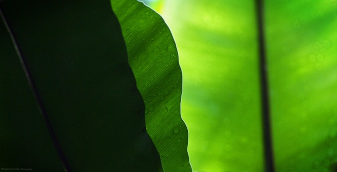 "Layers of leaves in a tropical green house... again, a great example of why I'm called ""Mr Green"" in the photography world"